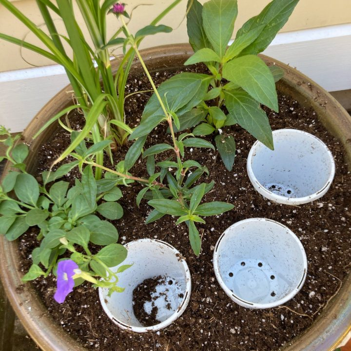 Planting a container